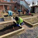 Frischer Wind im Müllerhausgarten – Salat und Gemüse fürs Mühlencafé